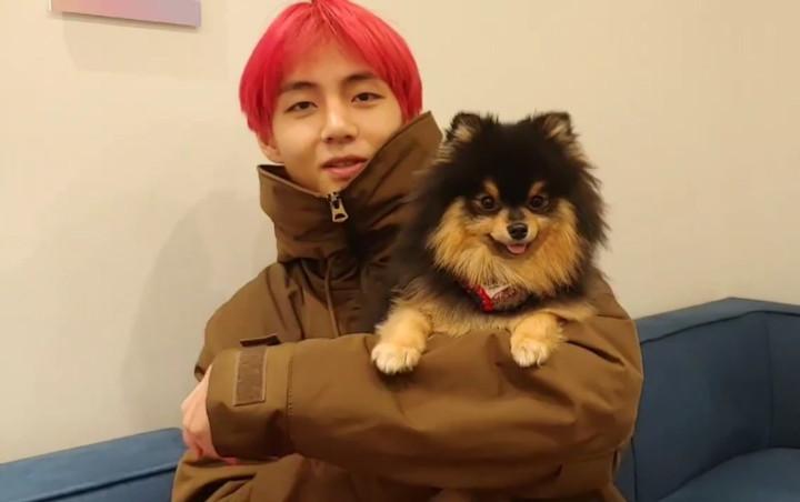 Ким ТэХён с собачкой